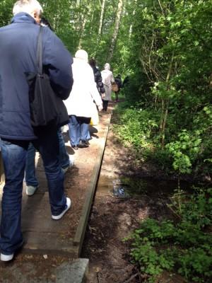 Människor går på rad på en spång i ett naturområde.