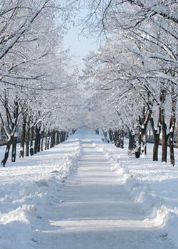 Snöfylld allé.