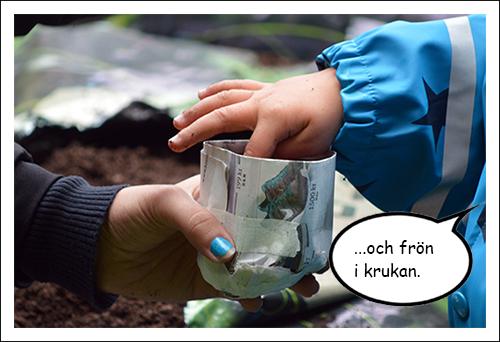 Barnhand lägger ner frö i kruka av tidningspapper.