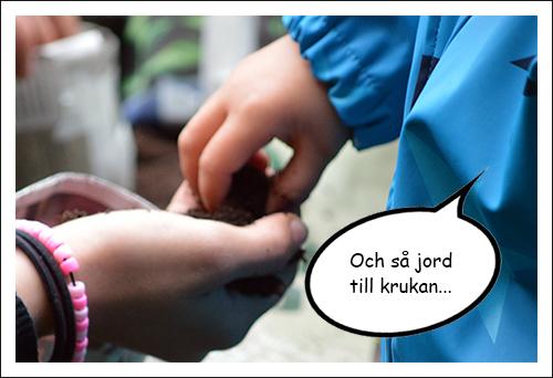 Barnhand tar jord ur pedagogs hand.