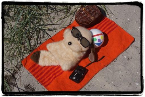 Mjukishund med glasögon ligger på strandfilt.