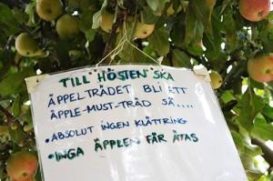 Lapp om att man inte får äta äpplena i trädet.