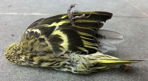 Död fågel.