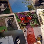 Bilder på fjärilar.