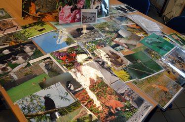 Bilder på olika djur ligger i en hög.