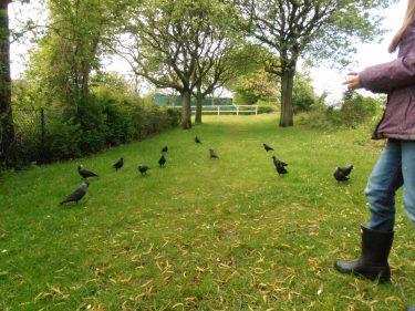 Elev matar fåglar på gräsmatta.