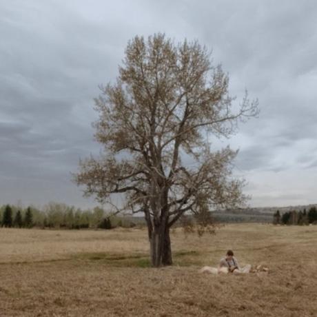 Träd på fält.