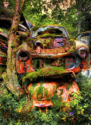 Gamla bilar övervuxna av mossa.