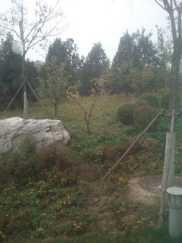 Kinesisk trädgård.