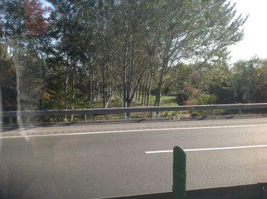 Skog från asfaltsväg.