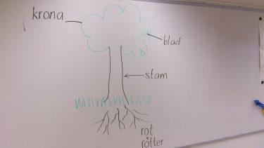 Teckning av ett träd.