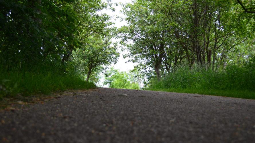 Grusad väg i skogen.