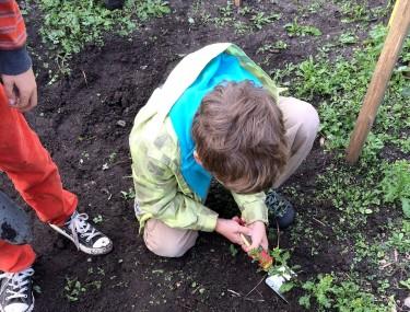 Barn gräver i jorden.
