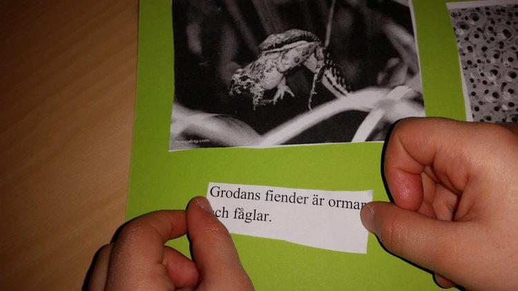 Text och bild om grodor.