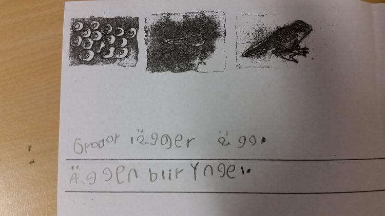 Text och bild om groda.
