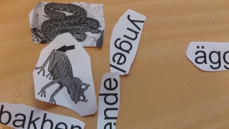 Utklippta ord och bilder på grodor.