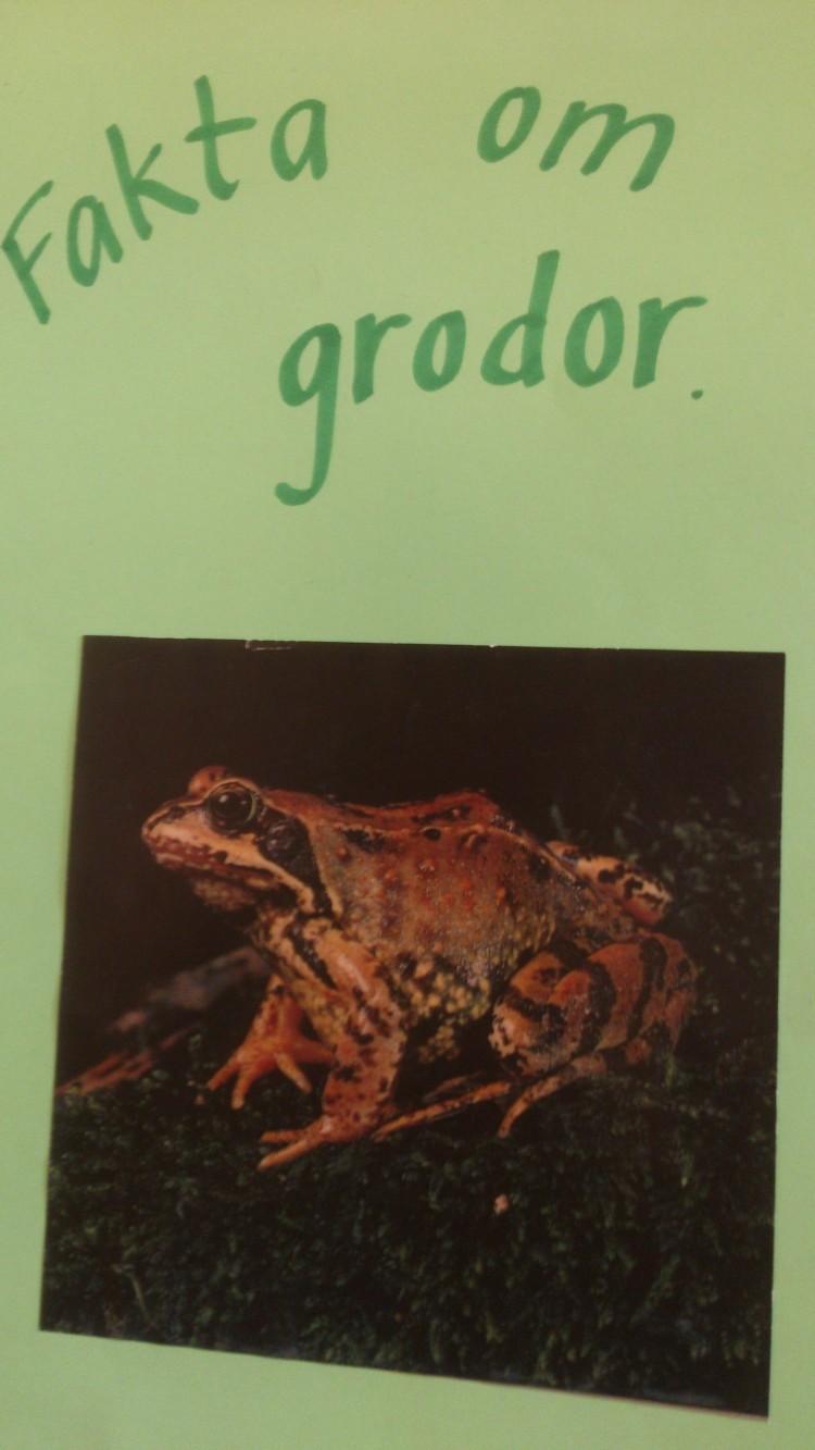 Fakta om grodor står på papper.