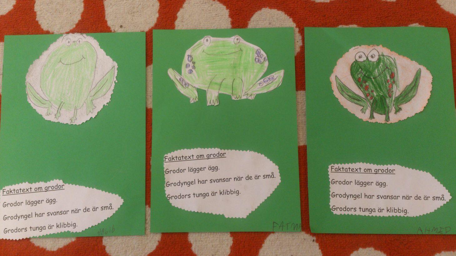 Teckningar och texter av och om grodor.