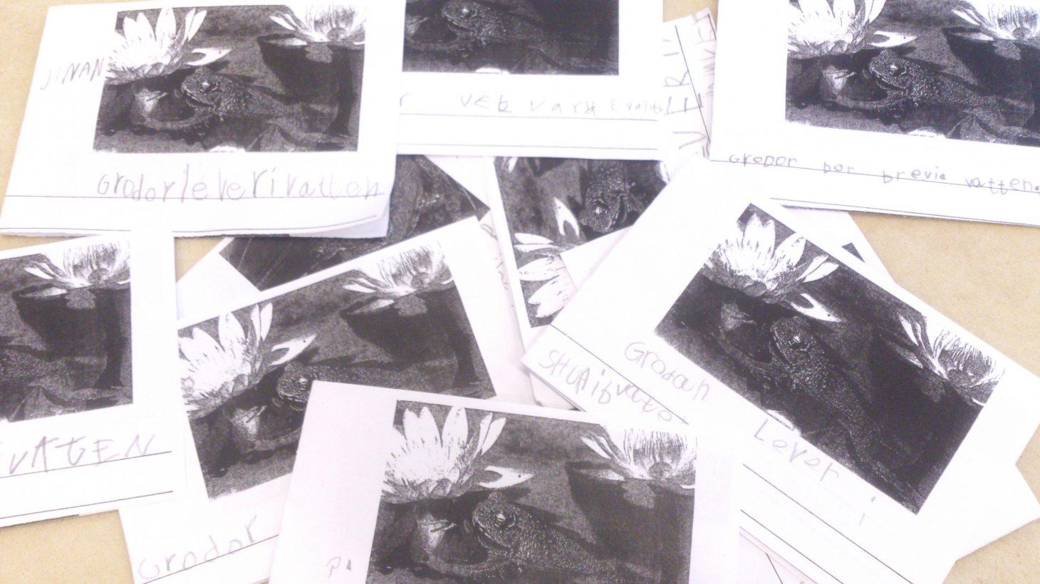 Papper med uppgifter om grodor.