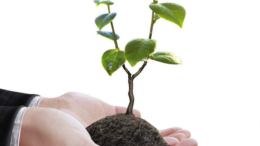 Händer håller fram en planta.