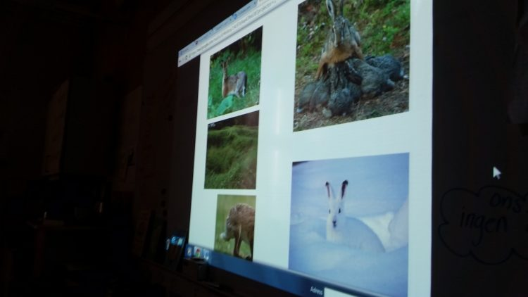 Projicerade bilder på harar.