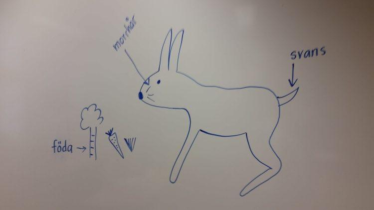 Teckning av hare.