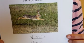 Elev håller upp bild och text om harar.