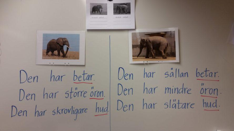 Teckningar av och faktatexter om elefanter.