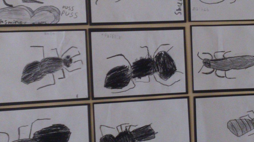 Teckningar av myror uppsatta.