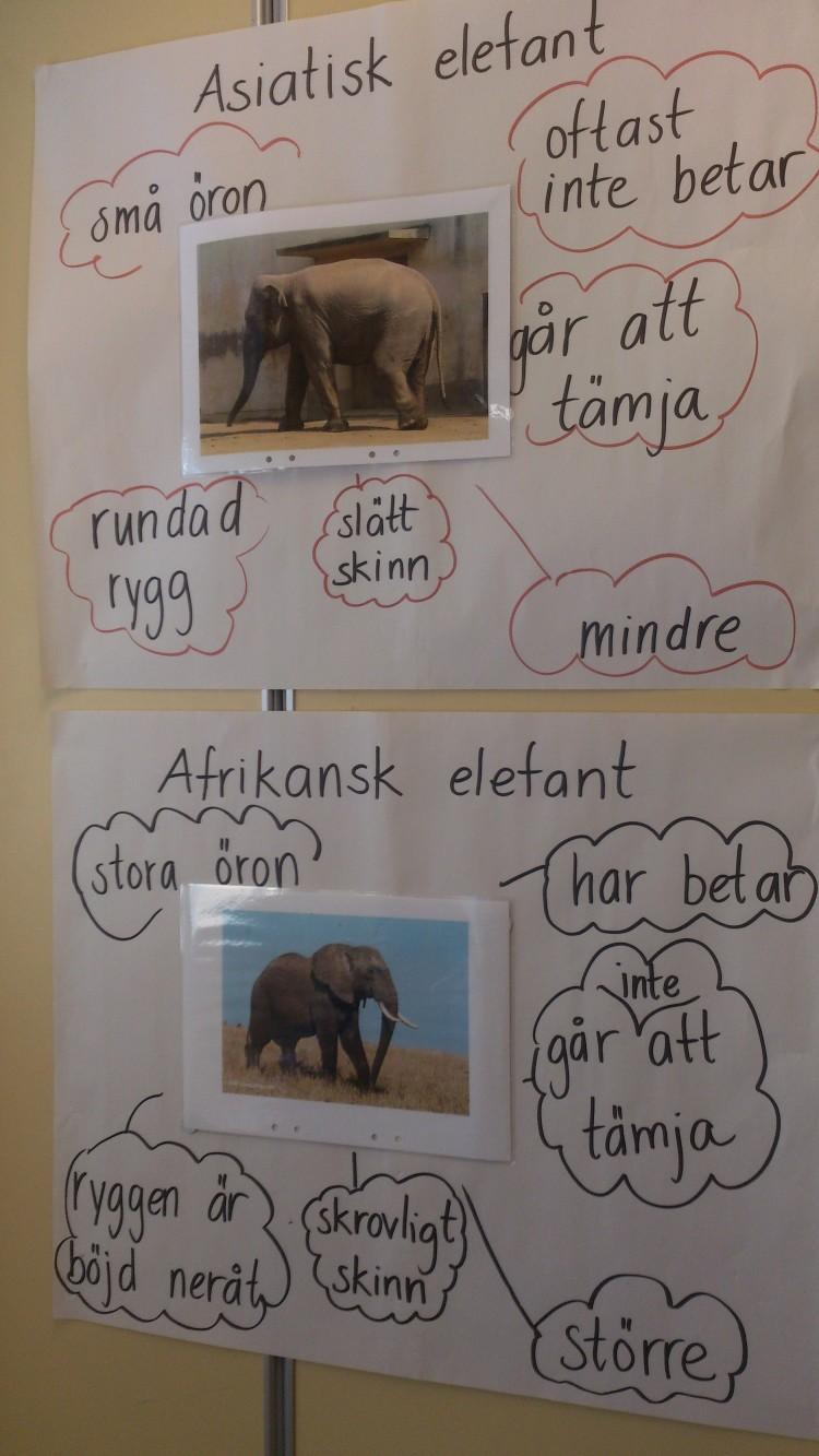 Tankekartor om elefanter.