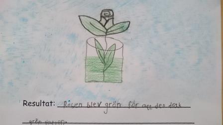 Teckning av blomma i vas med text under.