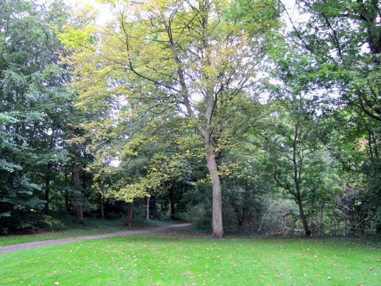 Träd i park.