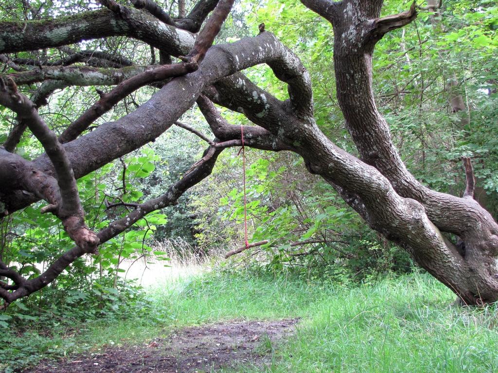 Gunga hänger från träd i park.