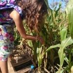 Elev plockar kolv från planta.