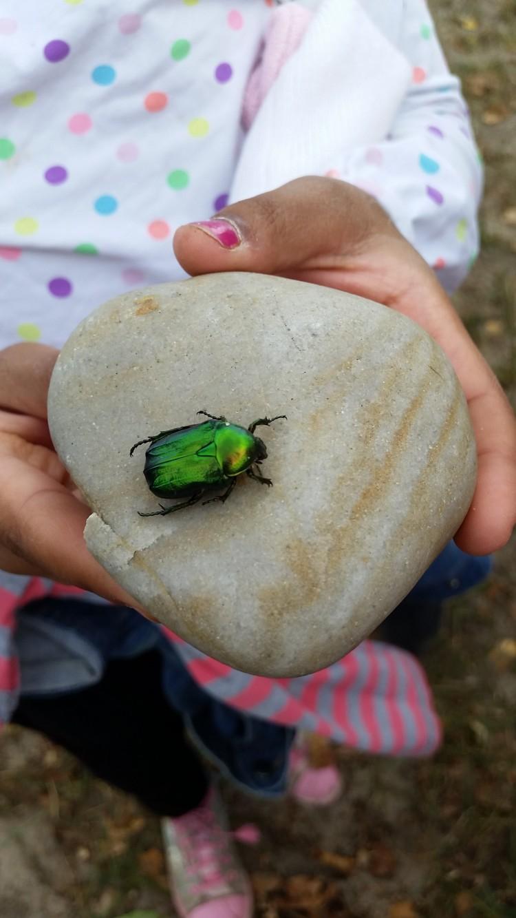 Grön insekt på sten som hålls upp av elev.
