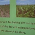Texter och bilder på majsfält.