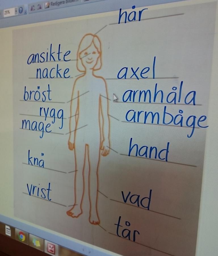 Kroppsdelar listade på tavla.