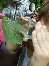 Barn använder lupp för att titta på löv.