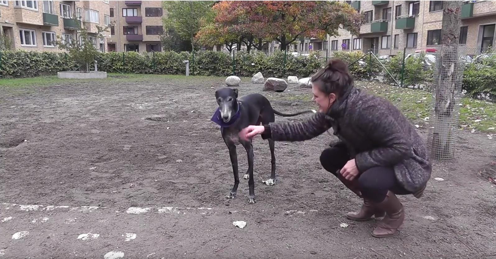 Josefin lockar på hunden.