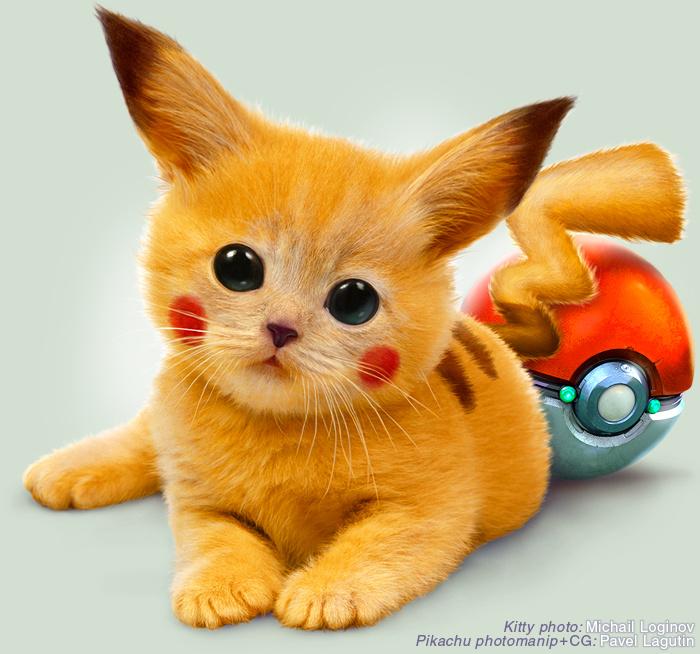 Katt som ser ut som Pickhau.
