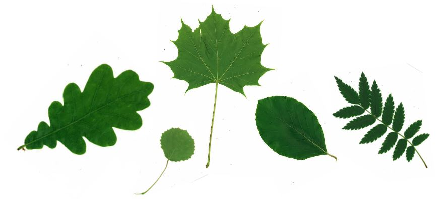 Olika typer av blad ligger på vitt papper.