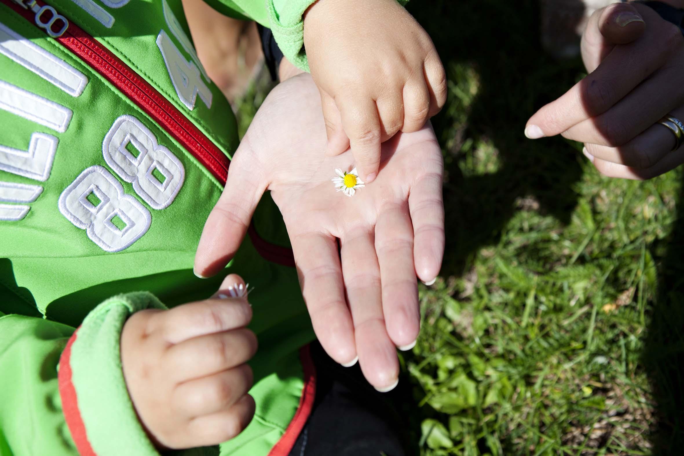 Barn lägger tusensköna i utsträck hand.