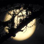 Måne med frostig kvist i förgrunden.