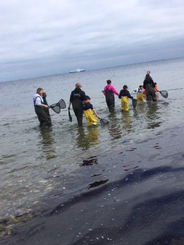 Vuxna och barn vadar ut i havet klädda i vadarbyxor.