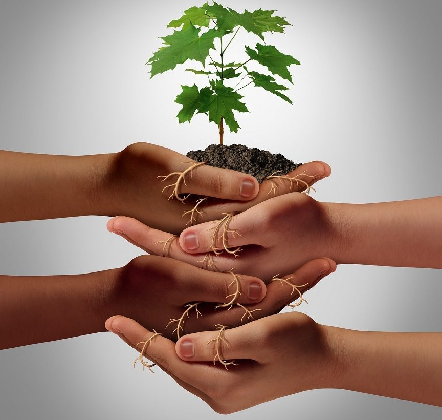 Fyra händer håller i träd som växer i jord.