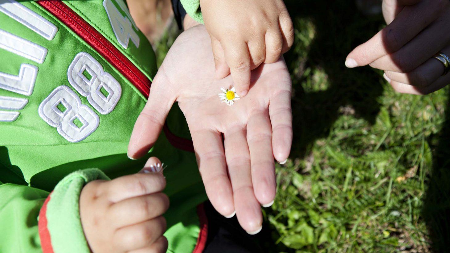 Barn lägger tusensköna i en hand.