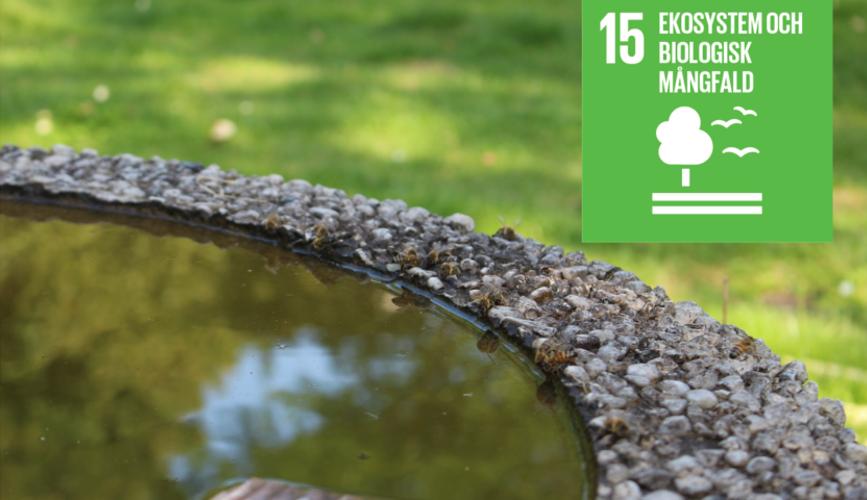 Globala målet 15: ekosystem och biologisk mångfald.