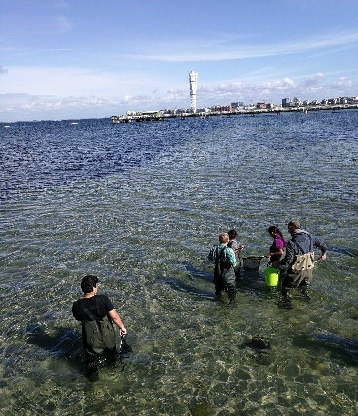 Elever i vadarbyxor håvar i havet.