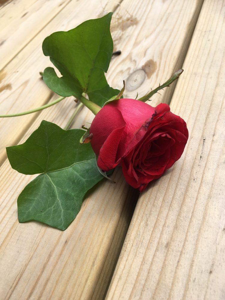 Röd ros ligger på trägolv.