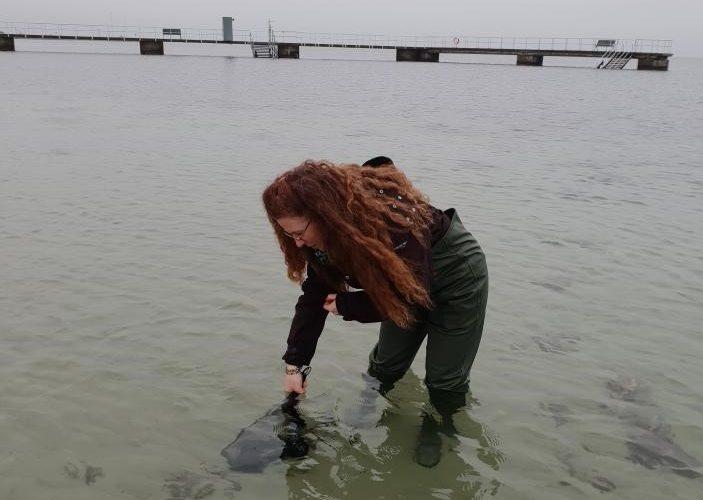 Katrina Fornell står i havet med vadarbyxor på och håvar.